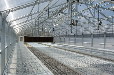 Plants in Greenhouse - Commercial Greenhouses